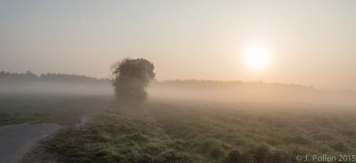Feld im Nebel-1